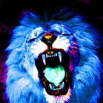 Gallery_lion